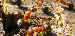 Karıncalar kış için nasıl hazırlanıyor