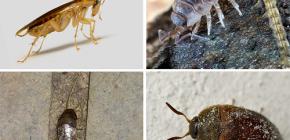 Dairede yaşayabilecek böcek türleri ve fotoğrafları