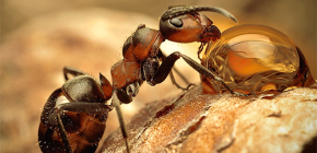 Karıncaların çeşitli türleri ve hayatlarının ilginç özellikleri fotoğrafları