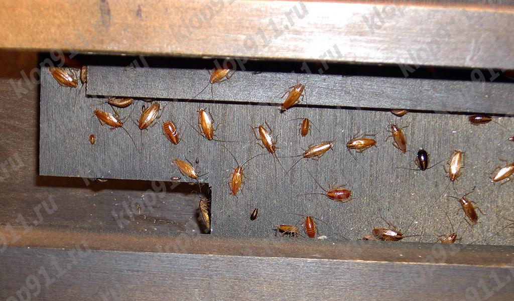 Mobilya içinde kırmızı hamamböceği yuva